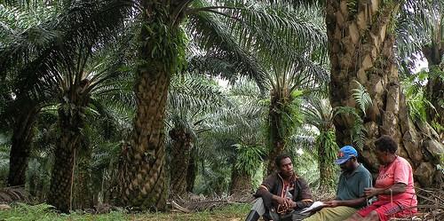 Mengunakan lahan yang terdegradasi ketimbang mengubah hutan alam menjadi perkebunan kelapa sawit, berdampak pada kecilnya kerusakan keanekaragaman hayati, ujar ilmuwan Douglas Sheil. Agus Andrianto/CIFOR