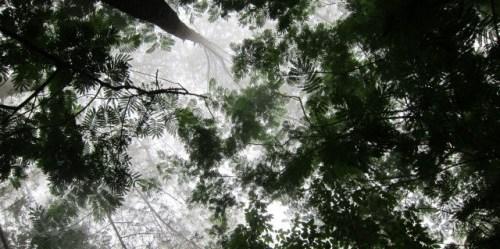 Para ilmuwan telah mengidentifikasi empat jenis pilihan kebijakan REDD+, termasuk pencocokannya di dalam peringkat transisi hutan berdasarkan efektivitas kemungkinan kebijakan untuk setiap tahap. CIFOR / Julie Mollins