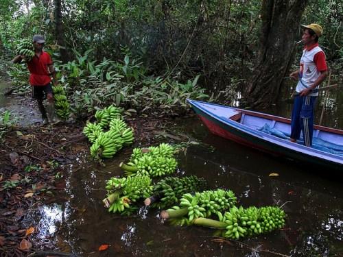 Promover un cambio de comportamiento para fomentar el consumo de alimentos frecuentemente considerados como inferiores, continúa siendo un gran desafío, dice Bárbara Vinceti, científica de Biodiversity International. Fotografía de CIFOR/Yayan Indriatmoko