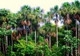 """""""Tenemos que pensar sobre la diversificación de los paisajes productivos en mosaicos, incorporando a los bosques como cortafuegos y como corredores biológicos o ambientales"""" dijo Miguel Pinedo-Vásquez, investigador principal del Centro para la investigación Forestal Internacional"""