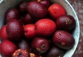 An aguaje fruit from the Peruvian Amazon. Neil Palmer/CIAT