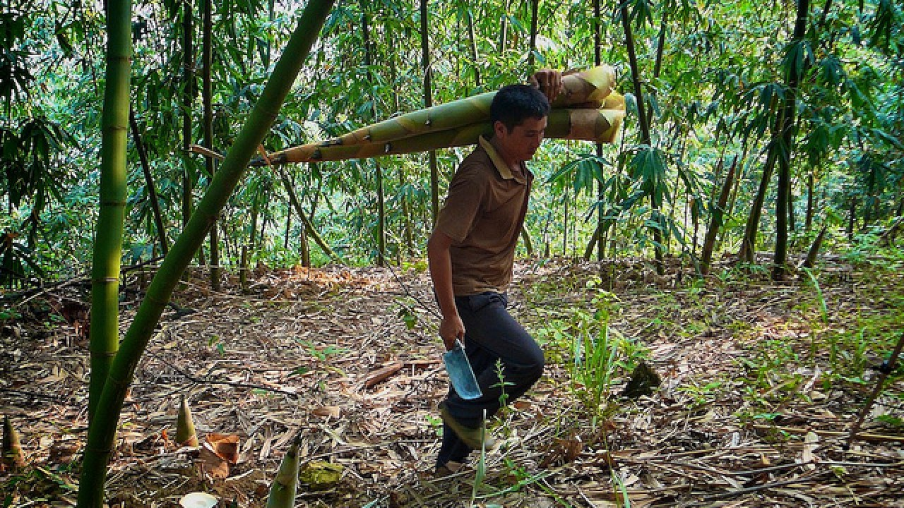 'Smart man's timber' offers 'opportunity' in the face of climate change