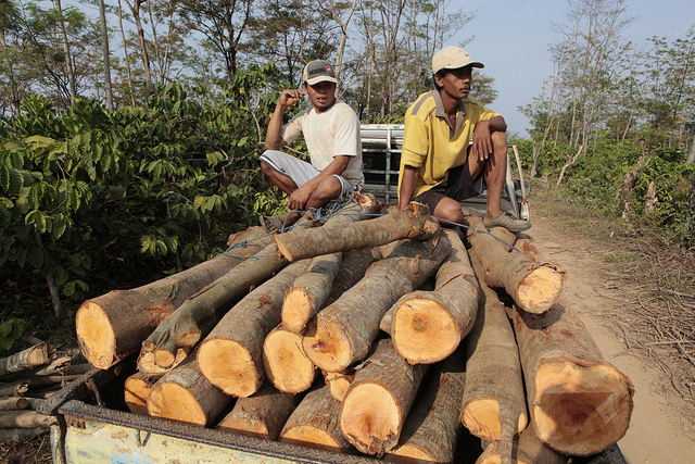 Experts: Local activism, political measures needed to stop illegal timber
