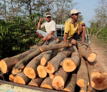 Cut logs being transported to saw mills, Jepara, Central Java, Indonesia.   Photo by Dita Alangkara for Center for International Forestry Research (CIFOR).