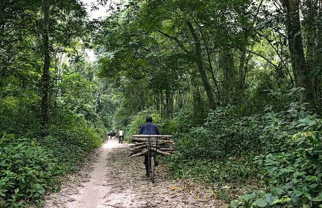 As population growth, logging and other activities such as mining put pressure on tree cover, Central African countries and international donors have strengthened their forest management policies.
