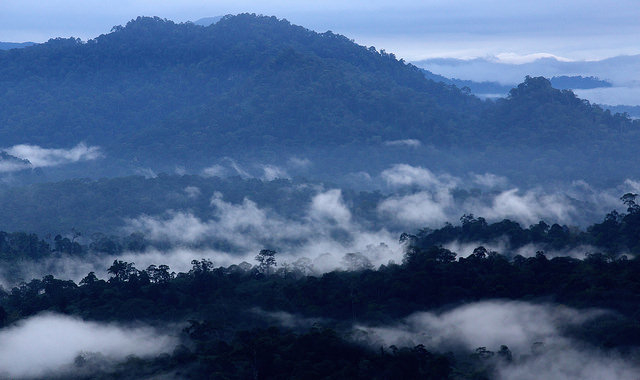 To define future of forests, first define 'forests'