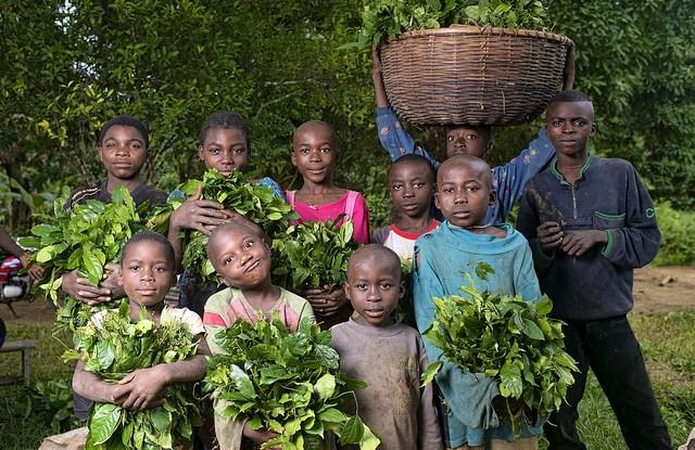 Un grupo de jóvenes muestra su cosecha de gnetum en la región central de Camerún. Un estudio reciente de los comités de manejo forestal comunitario en ese país encontró que, entre sus miembros, solo había una persona menor de 30 años de edad. Fotografía de Ollivier Girard / CIFOR.