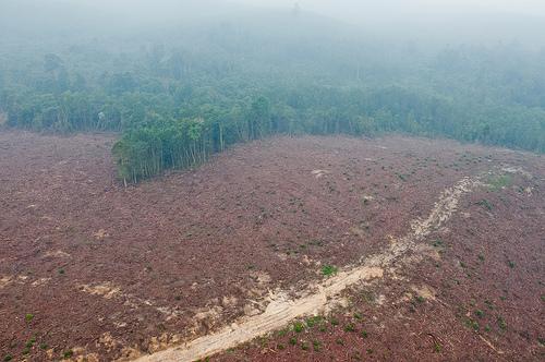 Hutan tebangan atau hutan produksi memiliki nilai yang seringkali diabaikan, membuat hutan rentan terhadap degradasi parah seperti penggundulan atau kebakaran. Photo @CIFOR.