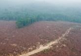"""Hutan tebangan atau hutan """"produksi"""" memiliki nilai yang seringkali diabaikan, membuat mereka rentan terhadap degradasi parah seperti penggundulan atau kebakaran. Photo @CIFOR"""