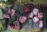 Daging hewan liar – dalam hal ini, buaya dan antelop – dijual di pasar Moutuka Nunene di Lukolela, Republik Demokrasi Kongo. Relatif sedikit diketahui mengenai risiko penyebaran virus Ebola terkait praktik pertanian atau rantai nilai daging hewan liar. Ollivier Girard/CIFOR photo