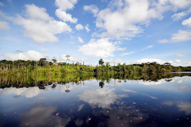 Amazon Brasil. Separuh penurunan deforestasi dunia dalam delapan tahun terakhir tercapai di satu provinsi di Brasil. Neil Palmer@CIFOR photo.