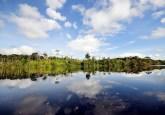 Amazonia brasileña. El 50% de la reducción mundial de la deforestación lograda en los últimos ocho años tuvo lugar en un solo estado brasileño. Foto Neil Palmer/CIFOR
