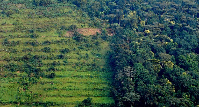 Forest landscape in Uganda. Douglas Sheil /CIFOR photo