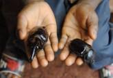 Beetlesinhand