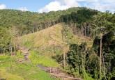 Tata kelola hutan yang masih jauh panggang dari api membutuhkan lembaga yang kuat  dengan kewenangan jelas serta pimpinan yang handal.  Photo: Moses Ceaser/CIFOR
