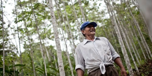 Demand for wood remains high in urban areas of Peru, where it is used as a sturdy and affordable building material—and helps to create hundreds of jobs.  Ernesto Benavides / CIFOR.