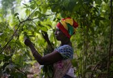 Una mujer cosecha hojas de Gnetum (okok) en un bosque de Camerún. Este país de África Central ha formalizado el uso de enfoques de paisajes en sus estrategias de gestión del suelo. Fotografía de Ollivier Girard / CIFOR.