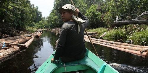 Indonesia melakukan uji coba SIS di Kalimantan Timur dengan mengembangkan pola informasi SIS dari bawah-ke-atas. Achmad Ibrahim/CIFOR