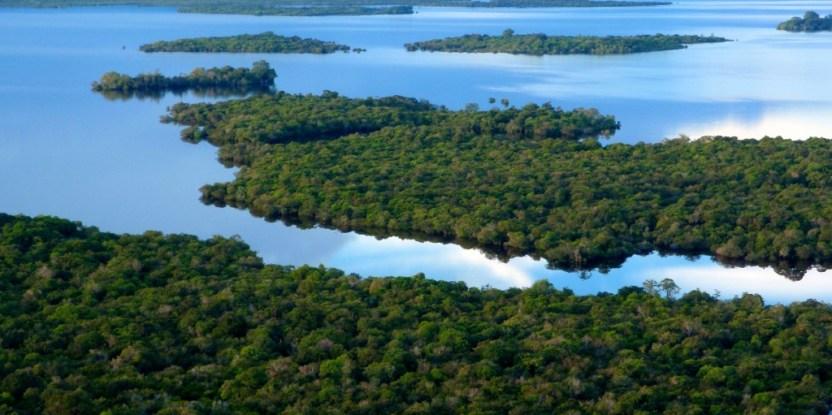 A view of swamp forest in Danau Sentarum National Park, Tekenang hill, Kapuas Hulu, West Kalimantan, Indonesia.