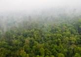 Pandangan udara hutan di Riau, Sumatera, Indonesia. Drone menawarkan potensi pemantuan hutan masyarakat efektif—dengan menavigasi wilayah abu-abu legal dan etika. Aulia Erlangga/Foto CIFOR