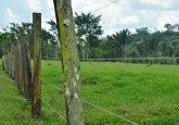 Fenced-off lands in a forested area of Mato Grosso, Brazil.  Icaro Cooke Vieira/CIFOR photo