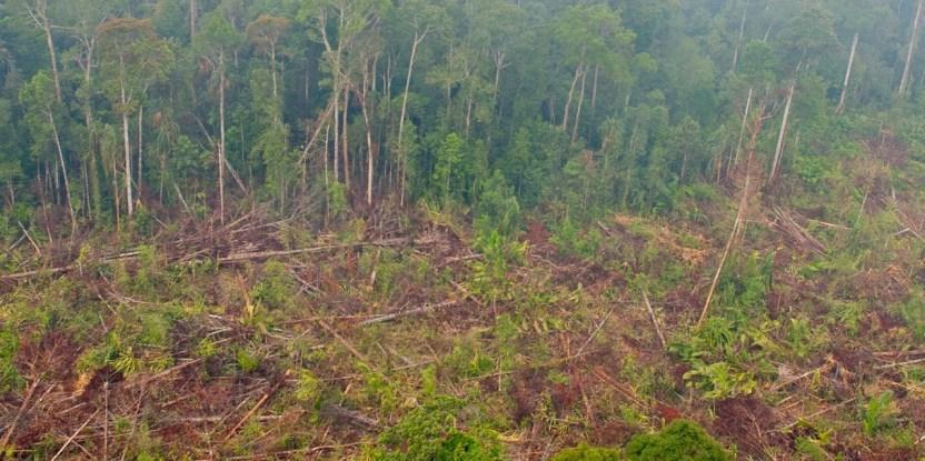 Deforestación en Riau, Sumatra, Indonesia. Aulia Erlangga/ Fotografía de CIFOR