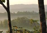 ¿Qué es? y ¿a quién se paga el derecho sobre el carbono que captura la biomasa en un territorio boscoso? Foto: Bosque de Osa, Reinaldo Aguilar.