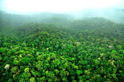 Bosque de Surinam que formaría parte del corredor de conservación indígena. Foto Trond Larsen, gracias a Conservación Internacional.