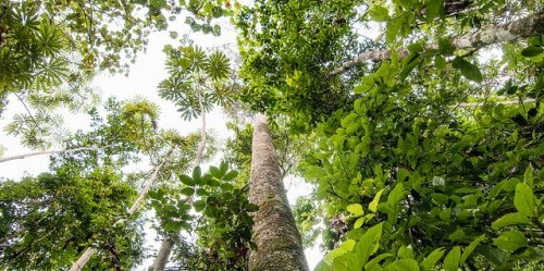 Collective rights for harvesting forest products must be secure - and the benefits must be equally and fairly distributed among participating individuals. Aulia Erlangga / CIFOR