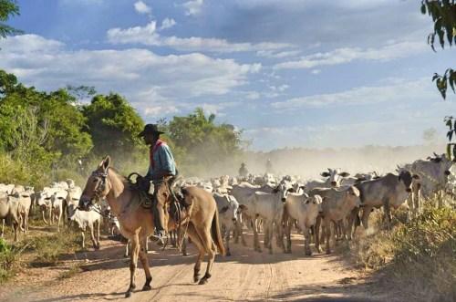 Las políticas del gobierno brasileño para enfrentar la deforestación (ocasionada principalmente por la agricultura y la ganadería) se están viendo socavadas por la falta de coordinación y comunicación, señala un nuevo estudio de CIFOR. Fotografía: CIFOR / Rodrigo Calvet.
