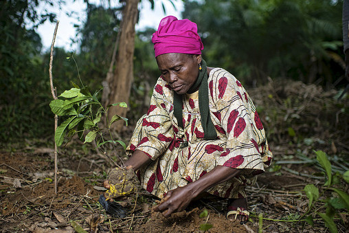 Forestry for a sustainable future – Making a difference beyond agreements