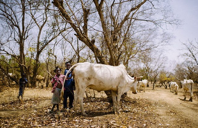 Children, cattle in the threatened dry forests of Burkina Faso. CIFOR.