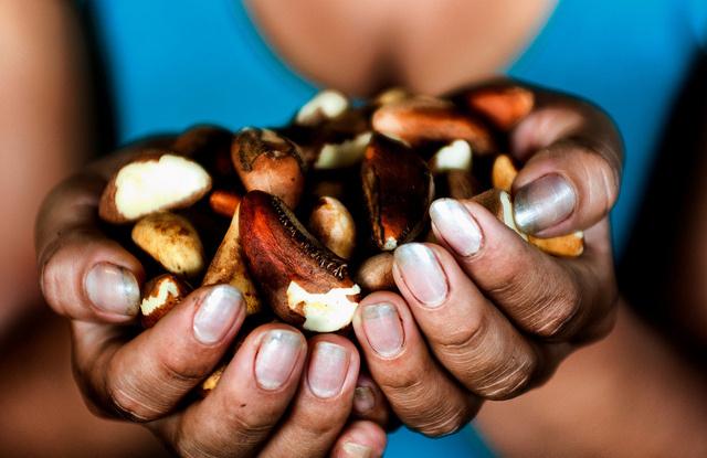 Peut-on trouver un équilibre entre l'abattage et la récolte des noix du Brésil? CIFOR