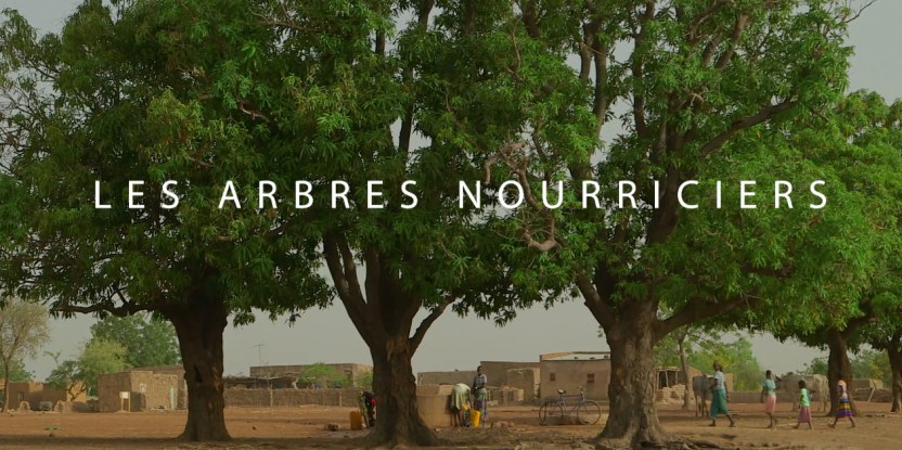 À travers le monde, plusieurs arbres procurent aux populations nourriture et autres bénéfices.