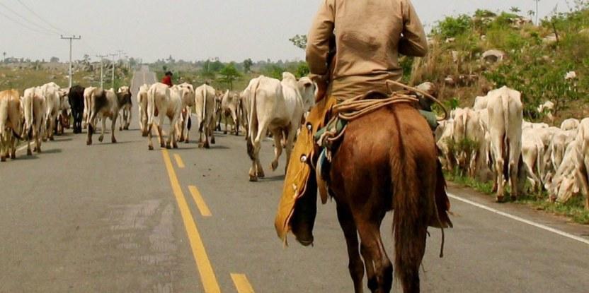 La ganadería es uno de los principales impulsores de la deforestación en Brasil. Fotografía de Pablo Pacheco (CIFOR)
