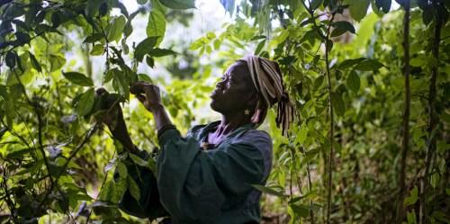 Les concessions forestières du Bassin du Congo doivent avoir de claires incitations à travailler ensemble afin de réduire les conflits. CIFOR