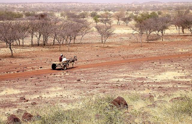 En Afrique, les forêts sèches représentent souvent un filet de sécurité pour les familles, lors de temps plus difficiles. Daniel Tiveau/CIFOR