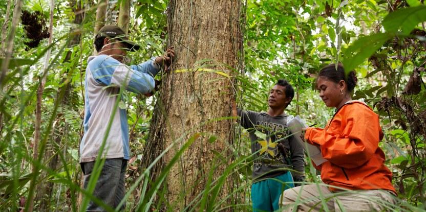La capacidad para evaluar y vigilar el estado de los bosques está mejorando en todo el mundo.