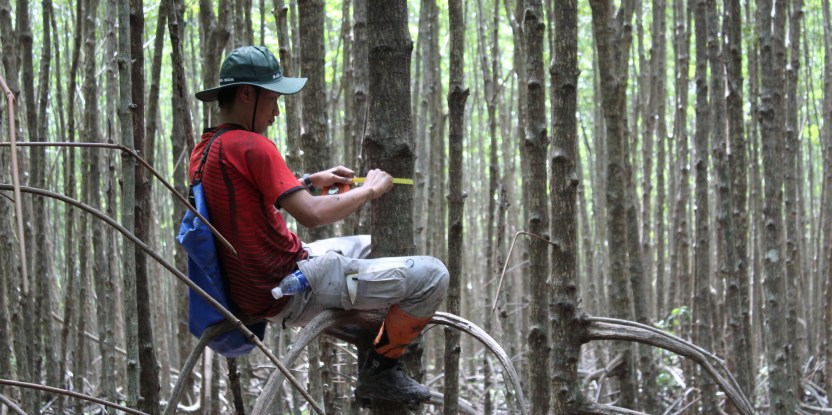 Around the world, the ability to measure and monitor the health of forests is trending upwards. Vien Ngoc Nam / CIFOR.