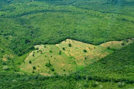 Aerial view of the Amazon rainforest in Brazil. Existing maps use satellite images to cover large areas, but don't always see how much biomass exists. Neil Palmer CIAT for CIFOR