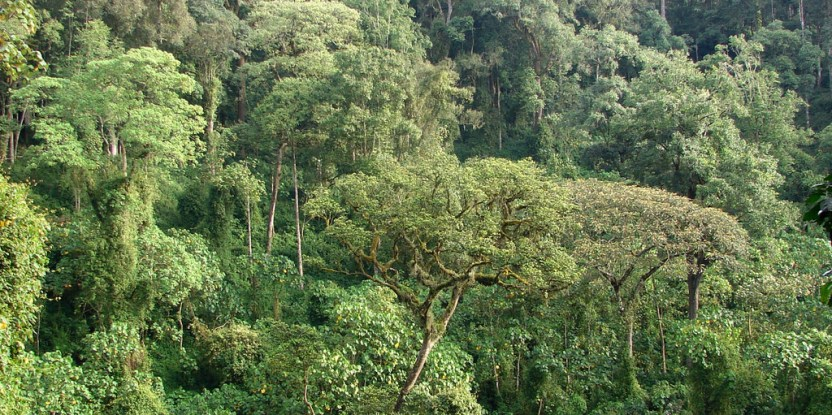 Scientists urge sustainable firewood collection efforts to fully consider the needs of the local population. Douglas Sheil / CIFOR