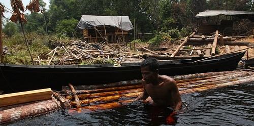 Seorang pria berjalan di air sambil berpegangan pada kayu yang diangkut menyusuri sungai di Kalimantan Tengah. Kerusakan  hutan dapat membuat dampak terhadap mata pencaharian masyarakat selama bertahun-tahun .