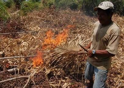 Forest fire in the Brazilian Amazon. Rachel Carmenta/CIFOR