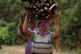 Masyarakat sepatutnya mendapat manfaat dari jasa lingkungan pengelolaan hutan lestari.