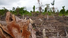 Tax amnesty, the green economy and peat restoration