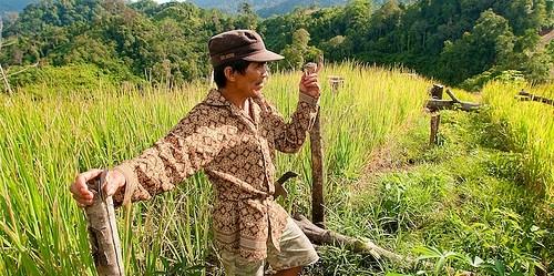 Konflik kepentingan dalam agenda para aktor yang terlibat dengan deforestasi tantangan terbesar REDD+ di Indonesia.