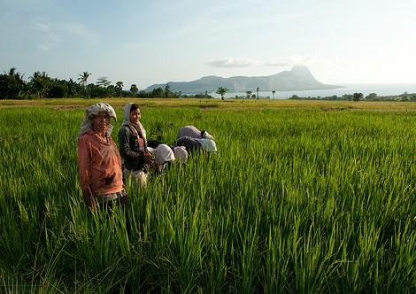 Perempuan adalah pemelihara terpercaya tanah dan lingkungan sekitar – mereka menanam benih yang membentuk masa depan.