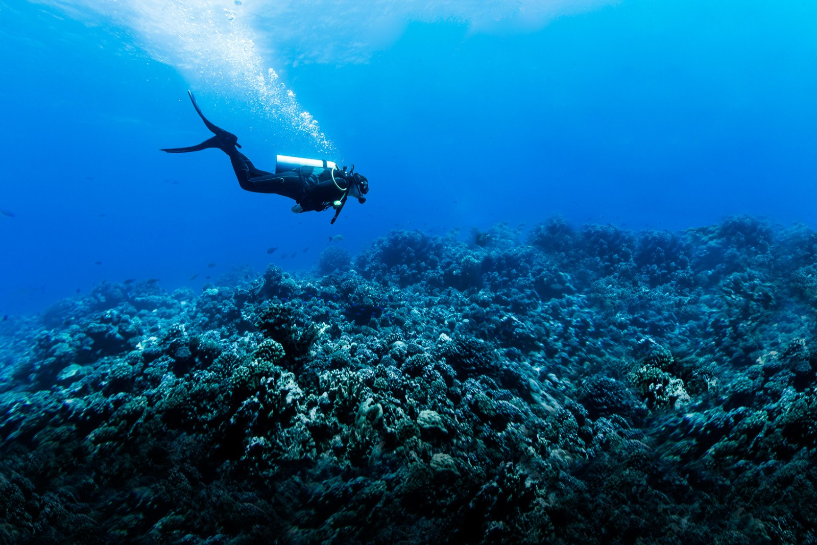 Woman Scuba Diving Over Huge Reef