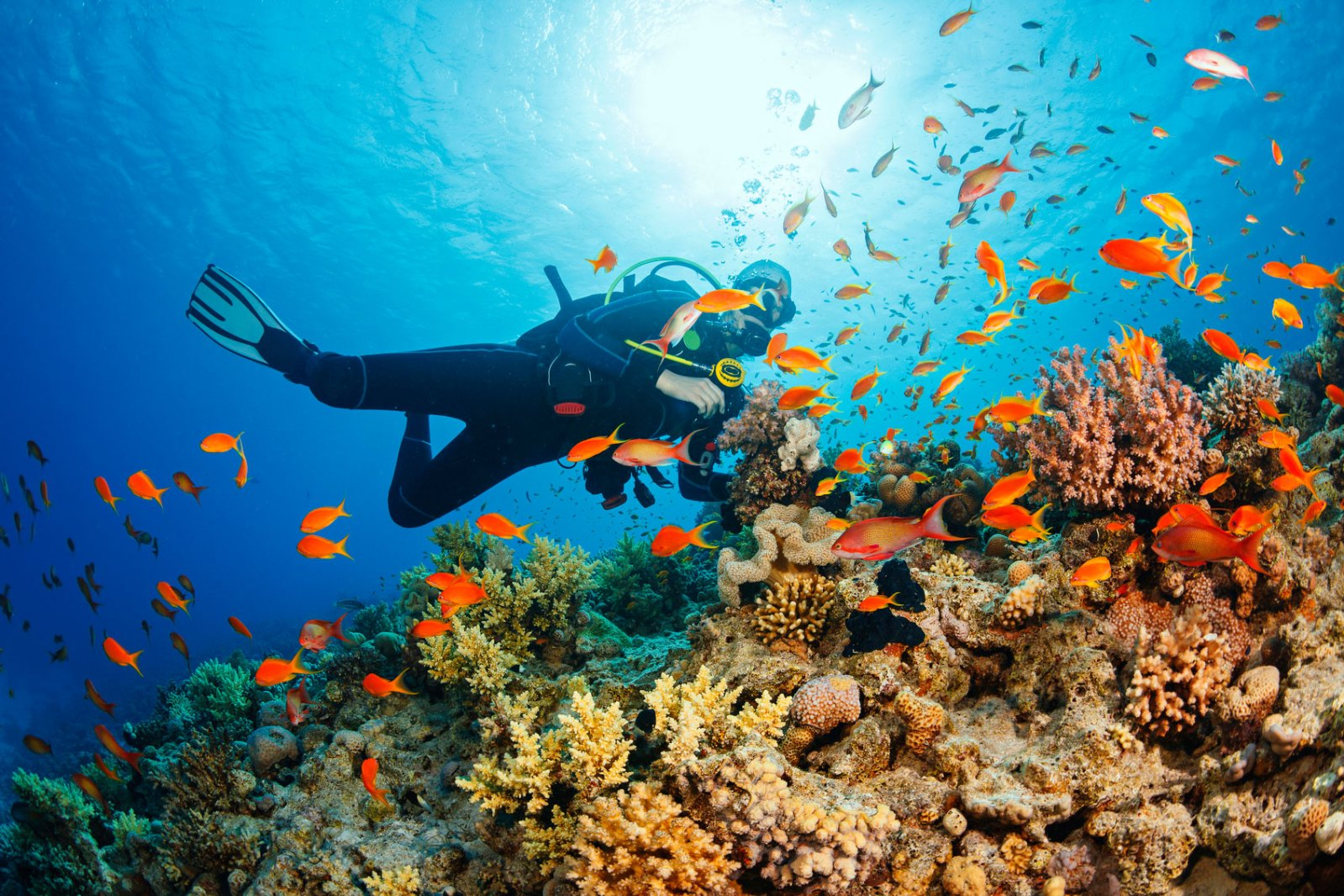 Underwater Scuba diver explore and enjoy Coral reef Sea life