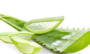 Recette à base d'Aloe Vera - Extracteur de jus